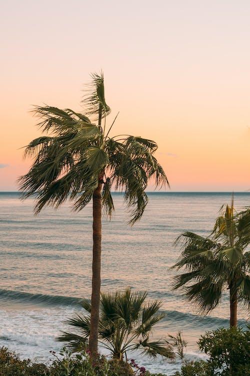Δωρεάν στοκ φωτογραφιών με ακτή, δέντρα, δέντρα καρύδας, δύση του ηλίου