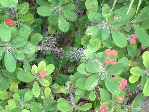 Free stock photo of flowers, foliage, green, nature