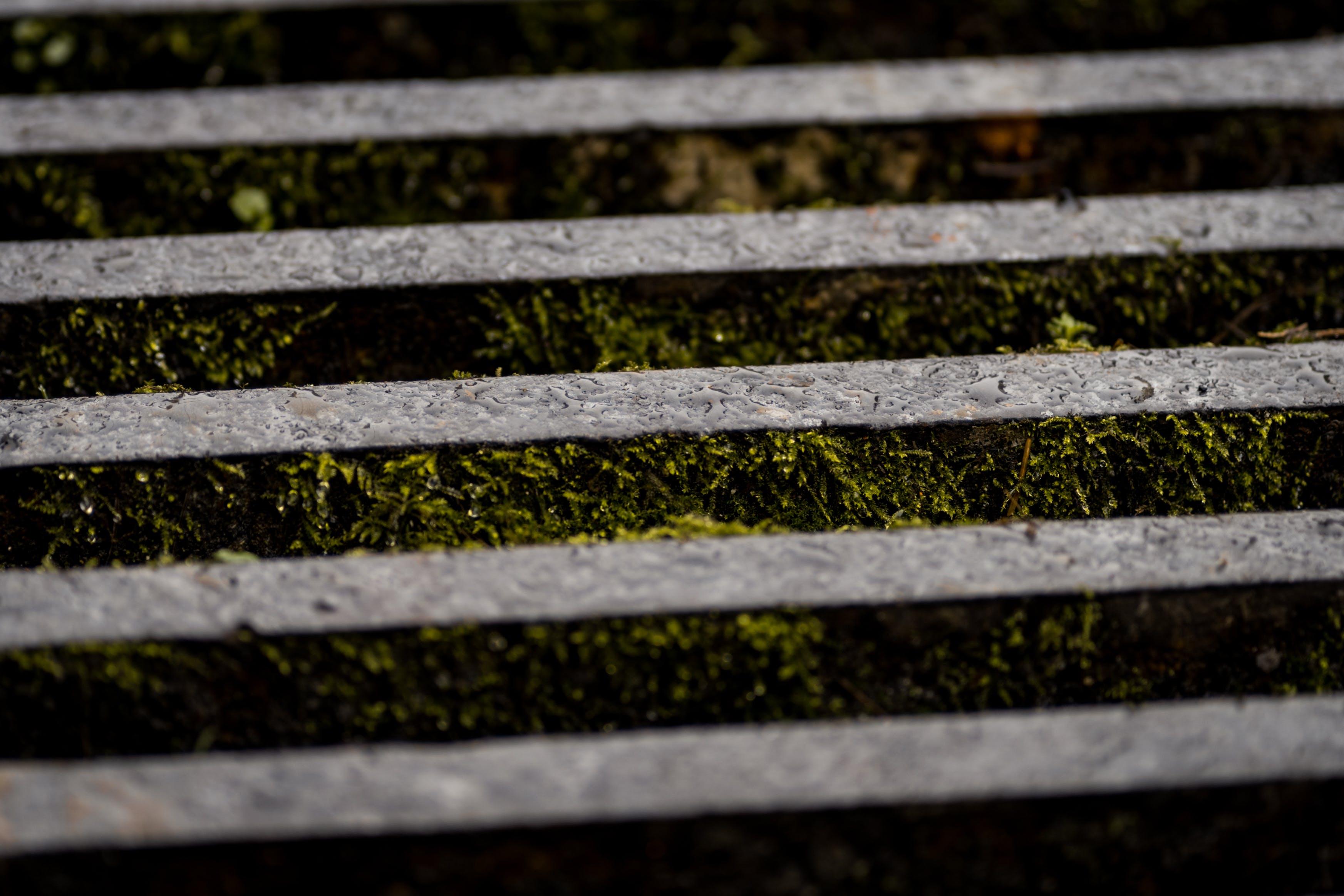 Free stock photo of green, grey, macro, moss