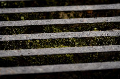 Бесплатное стоковое фото с вода, зеленый, максросъемка, мох