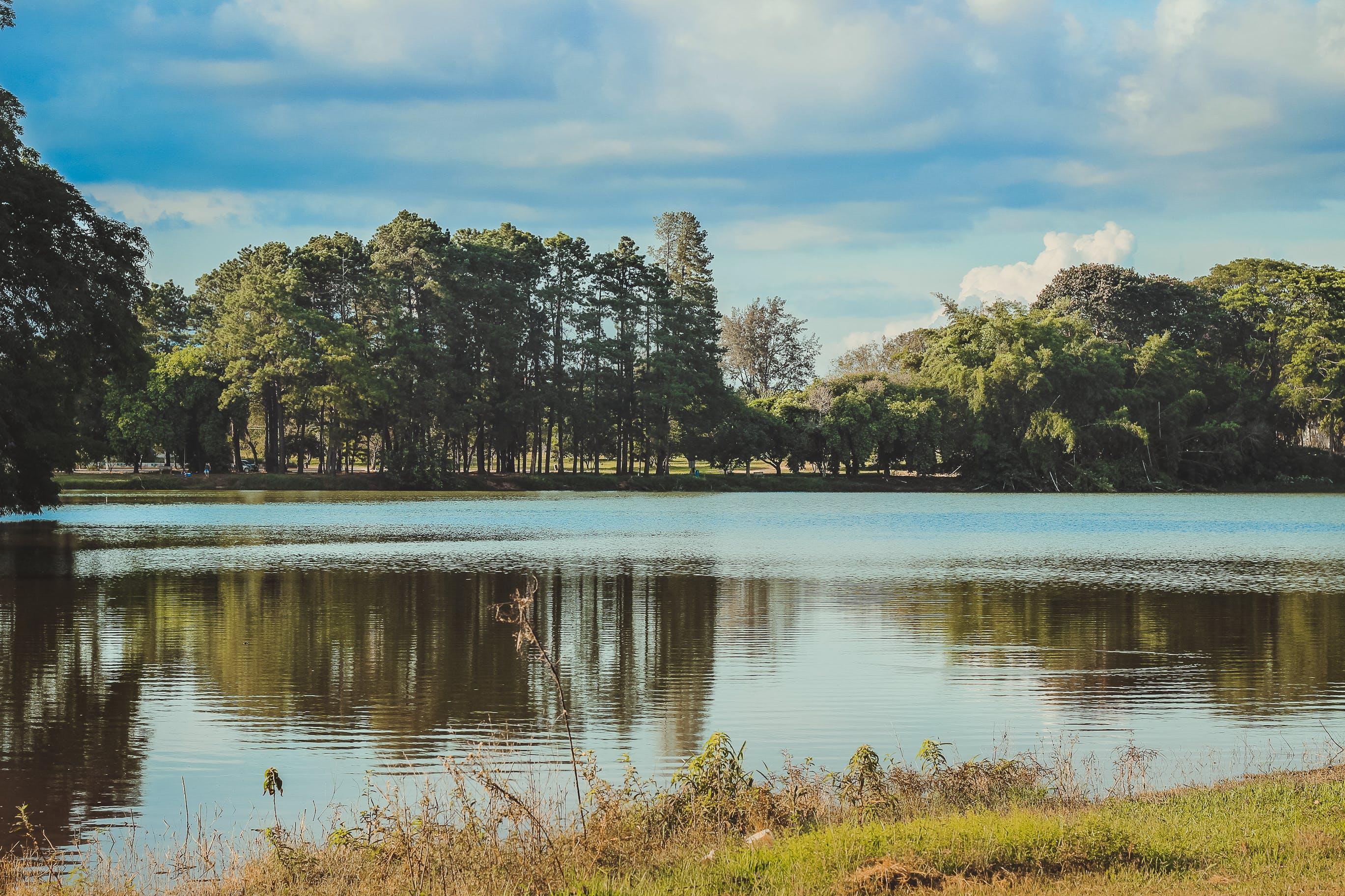 Free stock photo of daylight, forest, grass, HD wallpaper