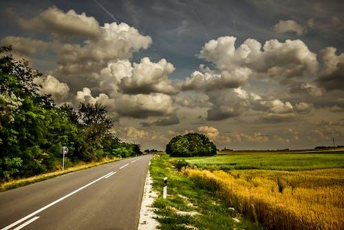 Gratis arkivbilde med grønn, gul, skyer, storm