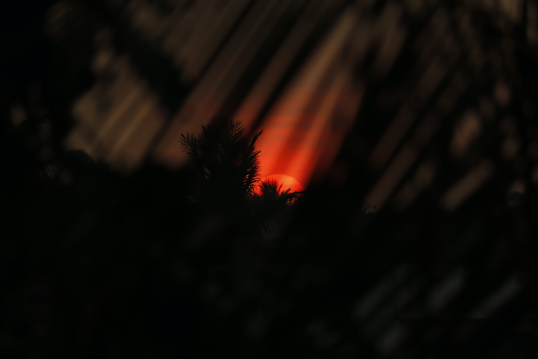 Free stock photo of black wallpaper, desktop background, golden sunset, silhouette