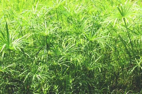 中國, 中國植物, 中國的天性, 在公園裡 的 免費圖庫相片