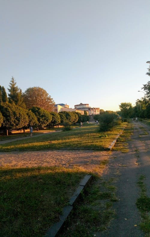 Gratis stockfoto met avond, bomen, groen, zon