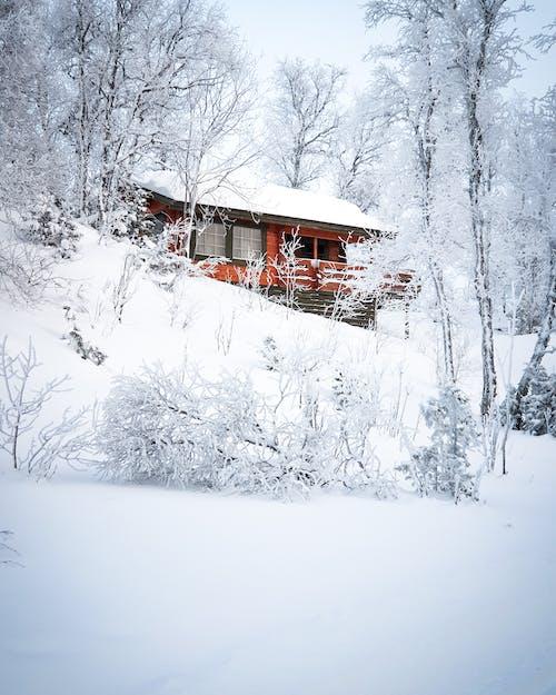 buz tutmuş, dağ evi, don, dondurulmuş içeren Ücretsiz stok fotoğraf