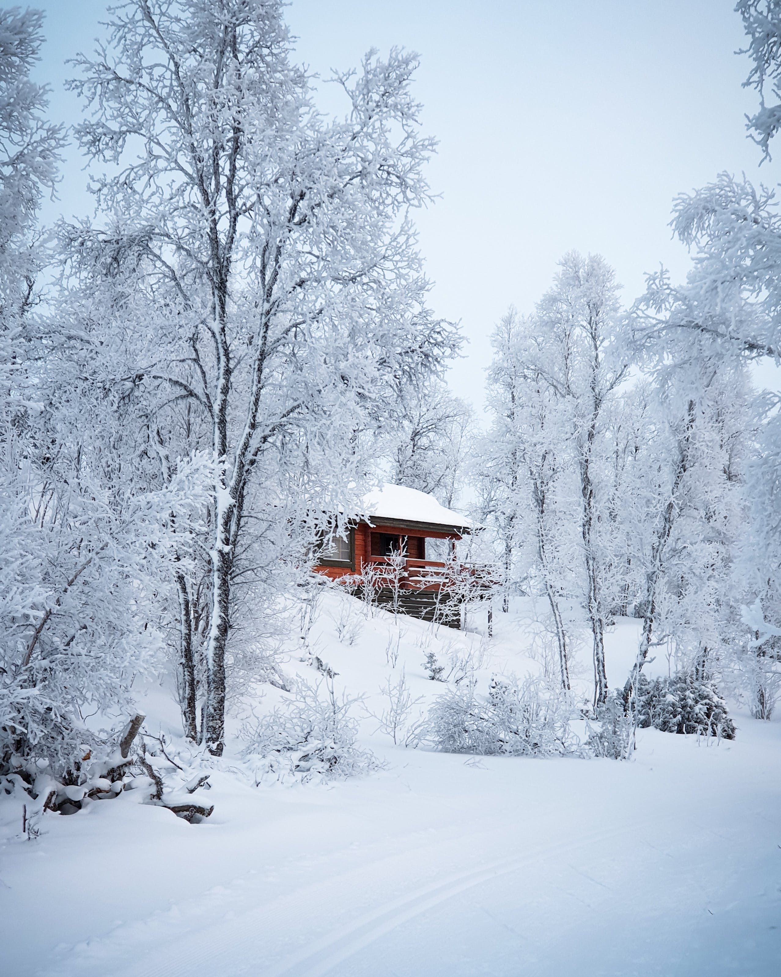 Red Wooden House Surrounded With Trees Covered With Snow