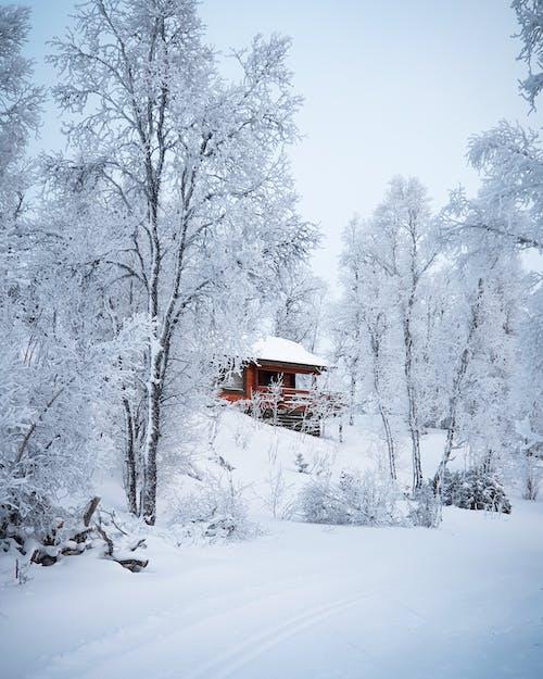 Foto profissional grátis de árvores, barraca, branco, cabine