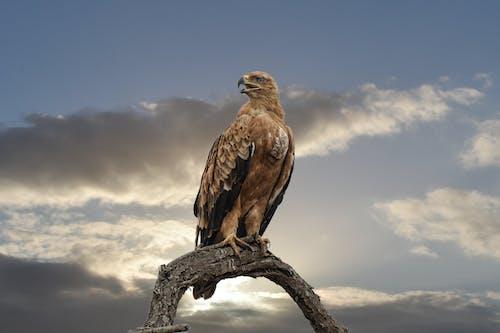 Základová fotografie zdarma na téma dravec, kořist, křídla, pírka
