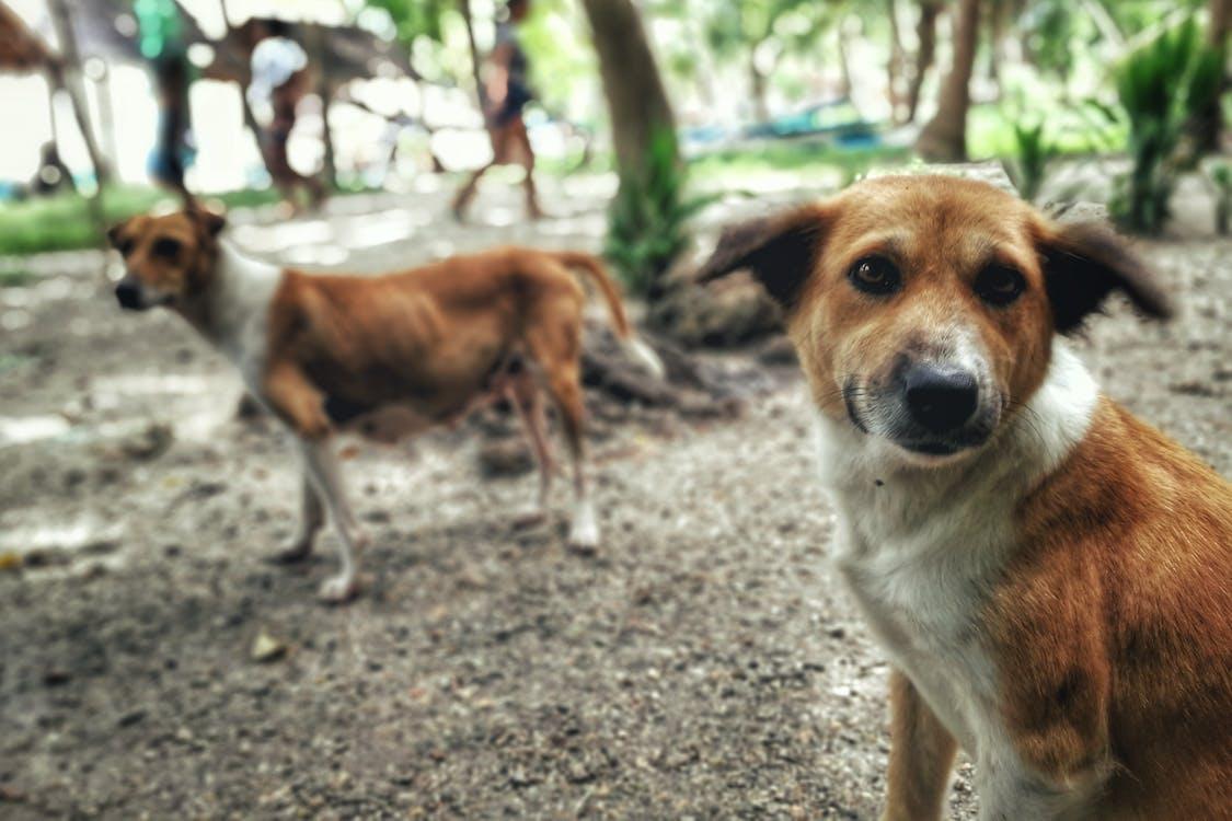 ビーチドッグ, 動物福祉, 救助犬