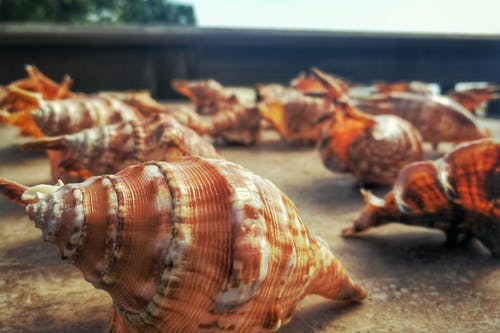 Free stock photo of Philippines, sea, seashells, shells