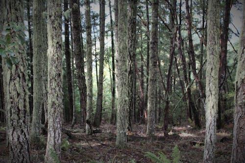 不気味, 木, 森林の無料の写真素材