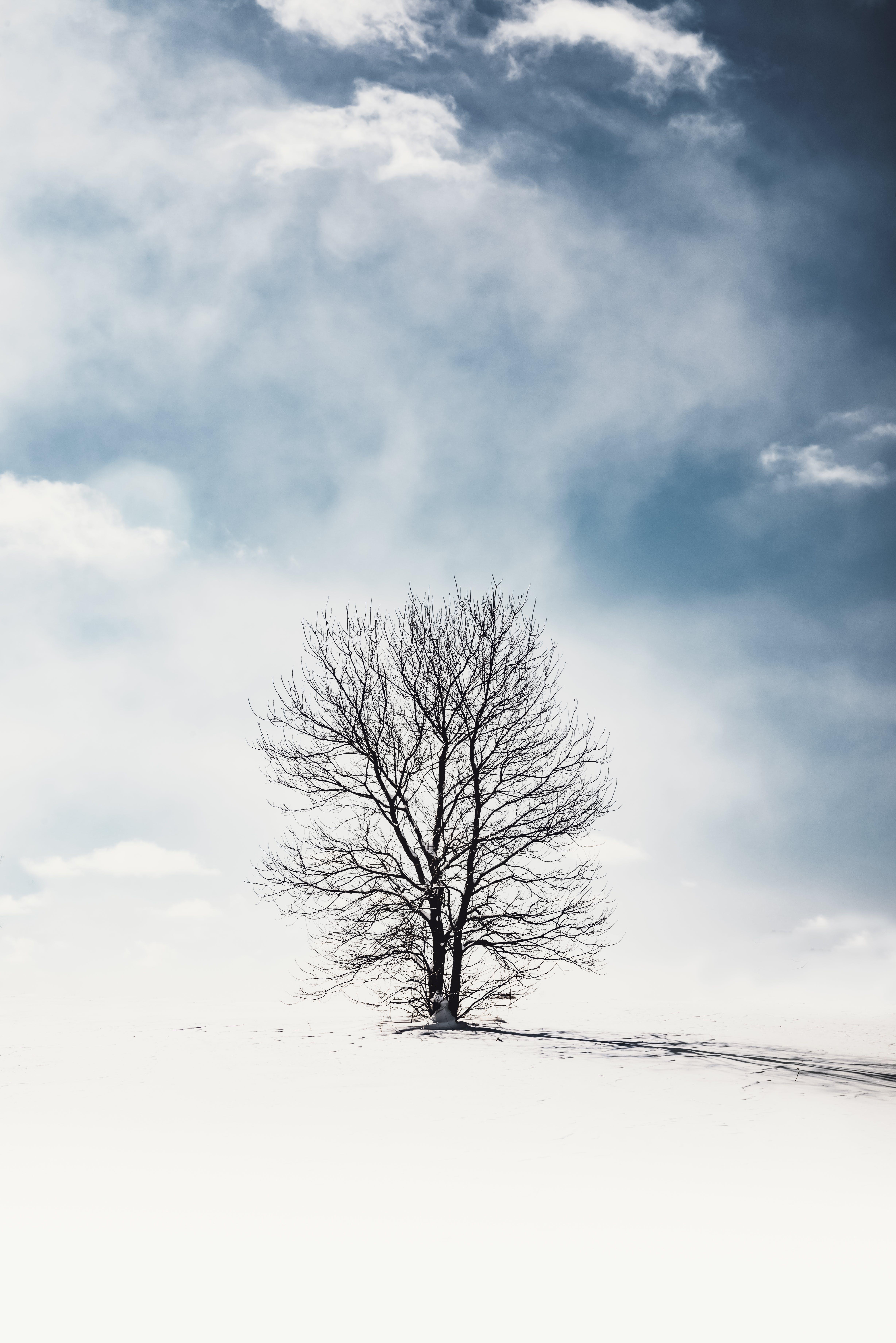 Kostenloses Stock Foto zu baum, eis, frost, gefroren