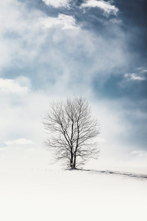 Nagie Drzewo Na śniegu