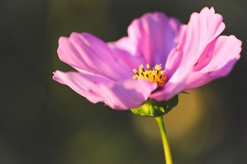 Безкоштовне стокове фото на тему «вечірнє сонце, кольорові сонцезахисні окуляри, прекрасна квітка, роман»