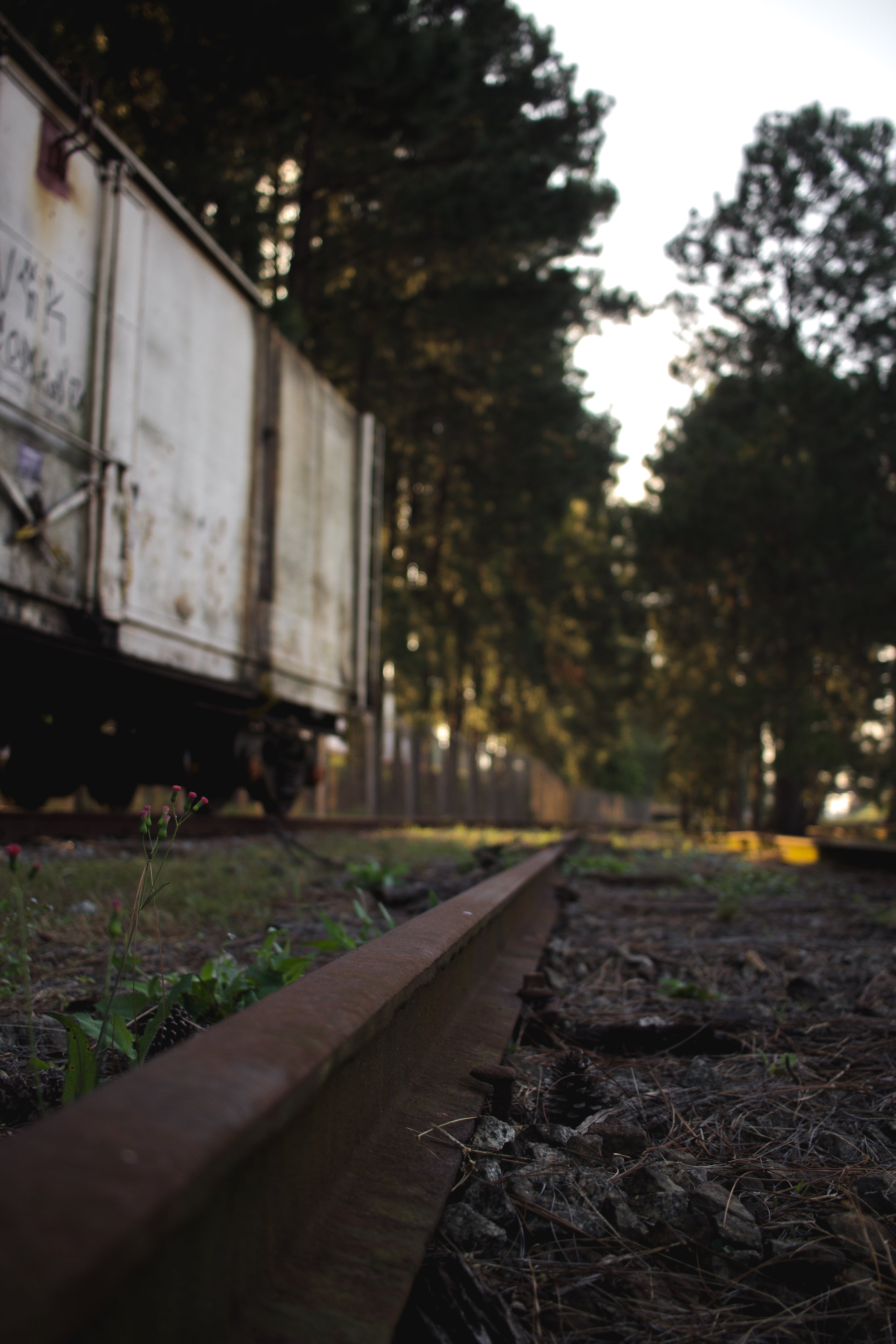 Free stock photo of beauty in nature, environment, nature photography, rail