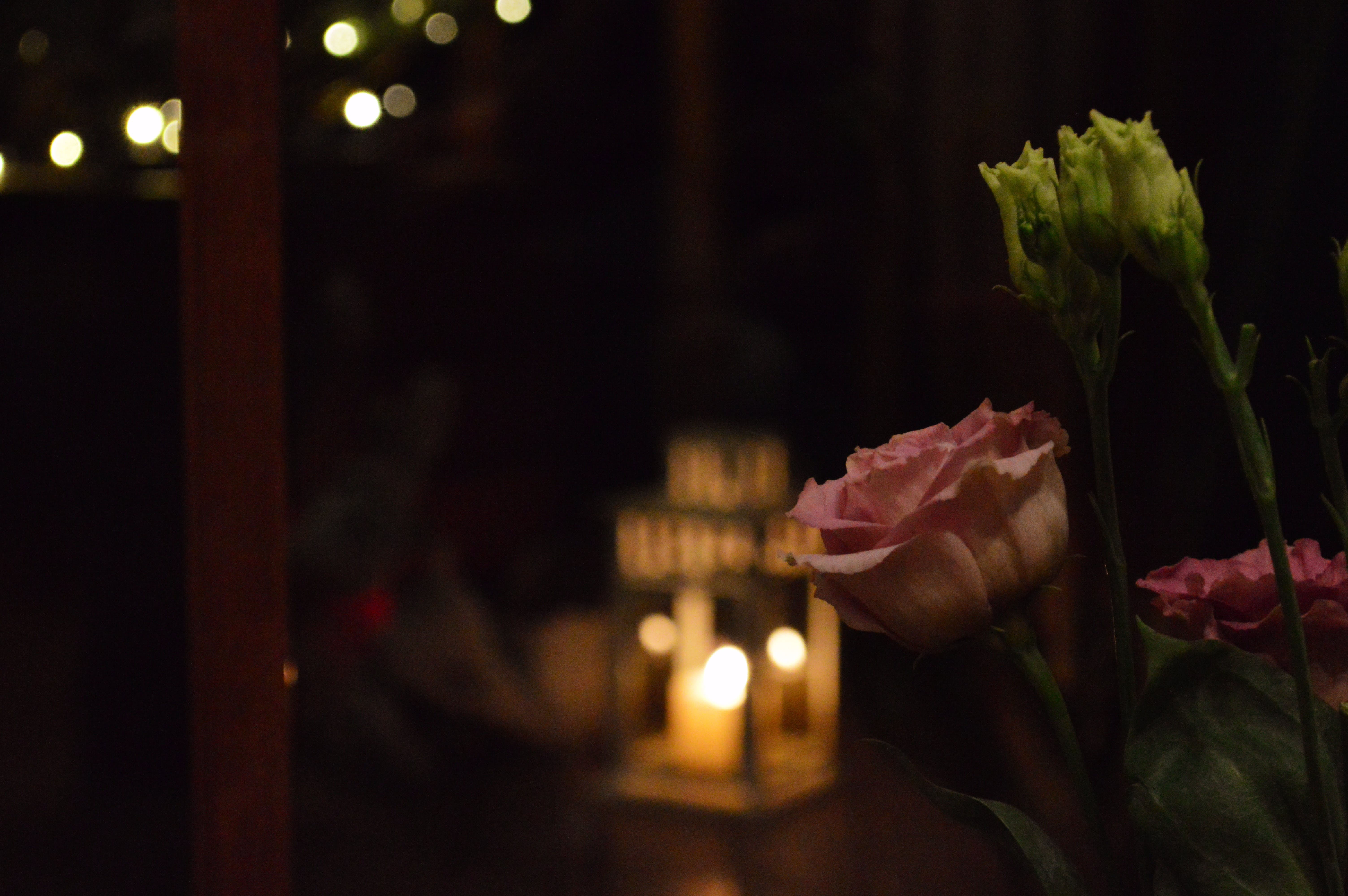Free stock photo of artificial flowers, dinner, evening, preening