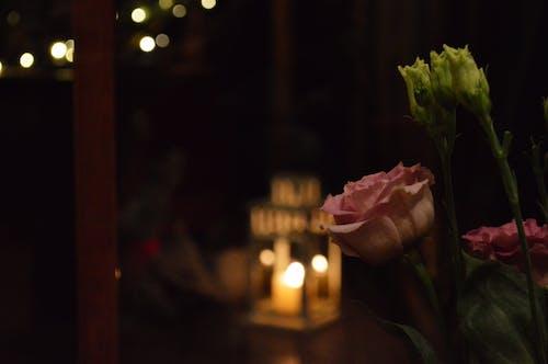 Безкоштовне стокове фото на тему «вечеря, вечір, чищення пір'я, штучні квіти»