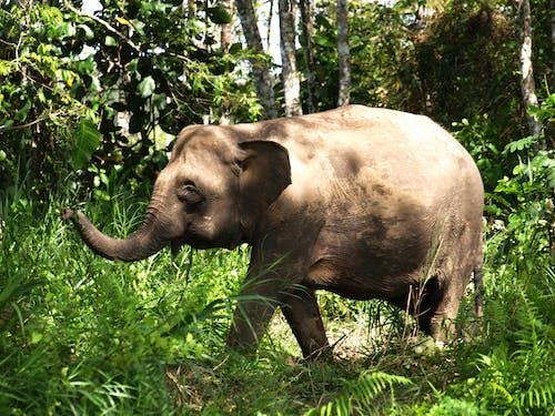Ilmainen kuvapankkikuva tunnisteilla norsu