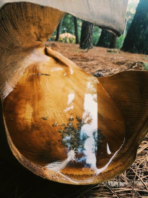 Foto d'estoc gratuïta de aigua, arbre mort, arts plàstiques, bellesa a la natura