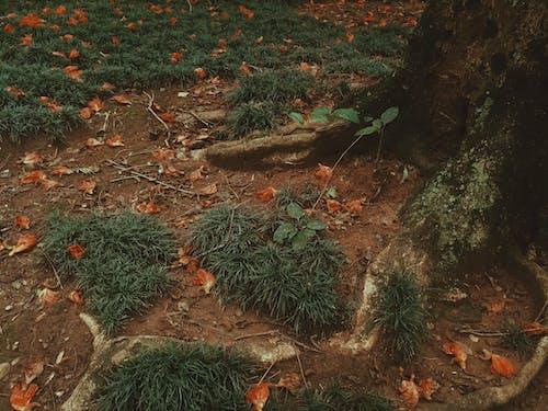 Foto d'estoc gratuïta de arbres, bellesa a la natura, flors boniques, mare natura