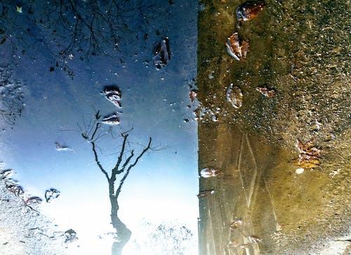 겨울, 도시, 물웅덩이, 반사의 무료 스톡 사진