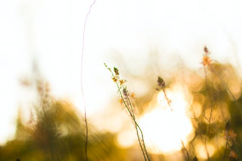 Fotobanka sbezplatnými fotkami na tému flóra, hracie pole, jemnosť, kvet