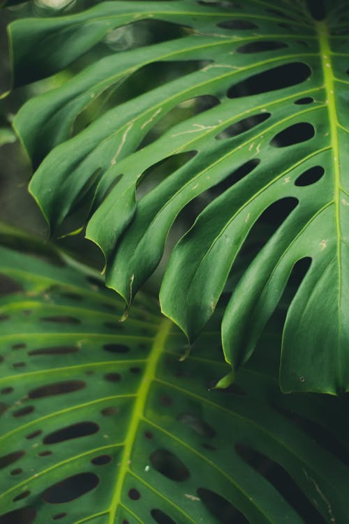 คลังภาพถ่ายฟรี ของ การเจริญเติบโต, พืช, สีเขียว, โคลสอัป