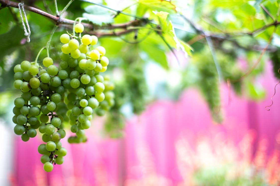 Selective Focus Photography of Grapes