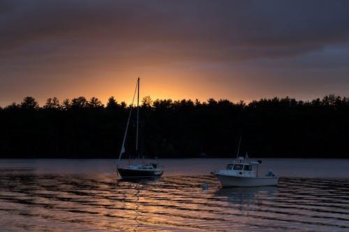 Foto d'estoc gratuïta de aigua, alba, arbres, barques