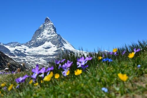 Základová fotografie zdarma na téma alpský, flóra, hory, hřiště
