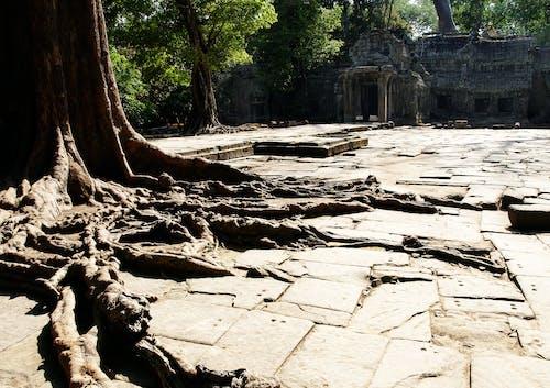 ağaç kökleri içeren Ücretsiz stok fotoğraf