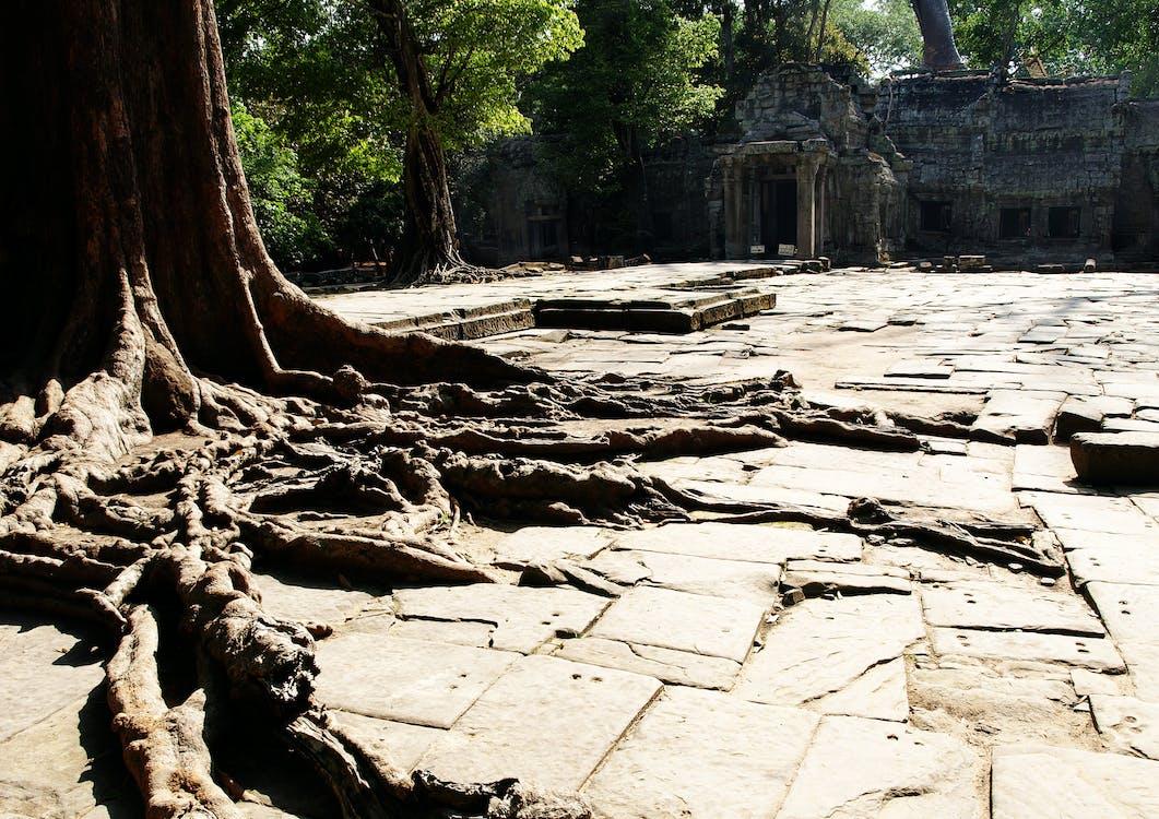 Ilmainen kuvapankkikuva tunnisteilla puun juuret