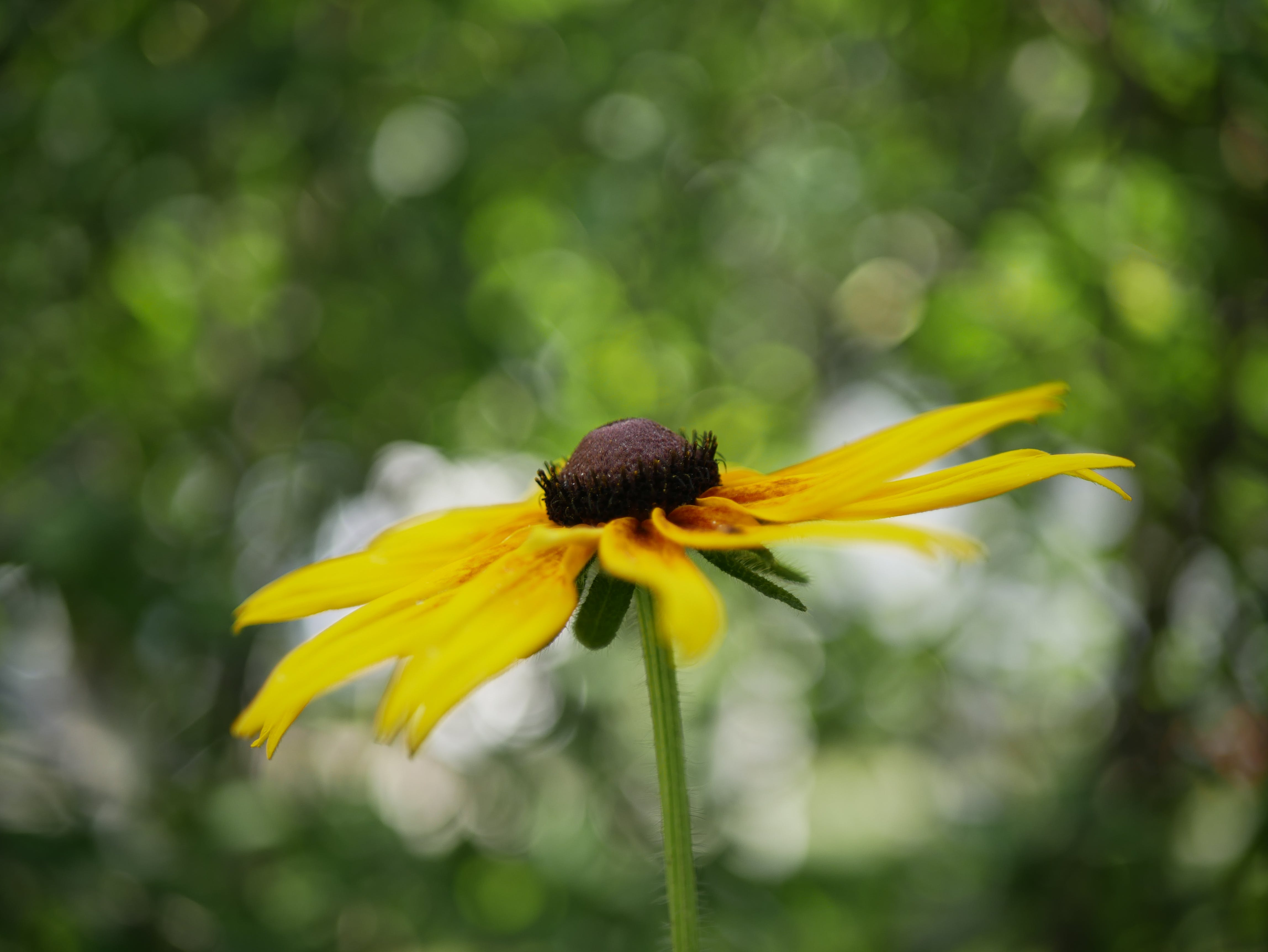 Δωρεάν στοκ φωτογραφιών με kwiaty, lato, ogrod, wiosna