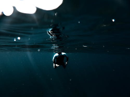 Free stock photo of gopro, mald, underwater
