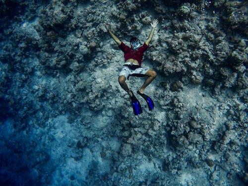 Free stock photo of maldives, ocean, snorkeling, underwater