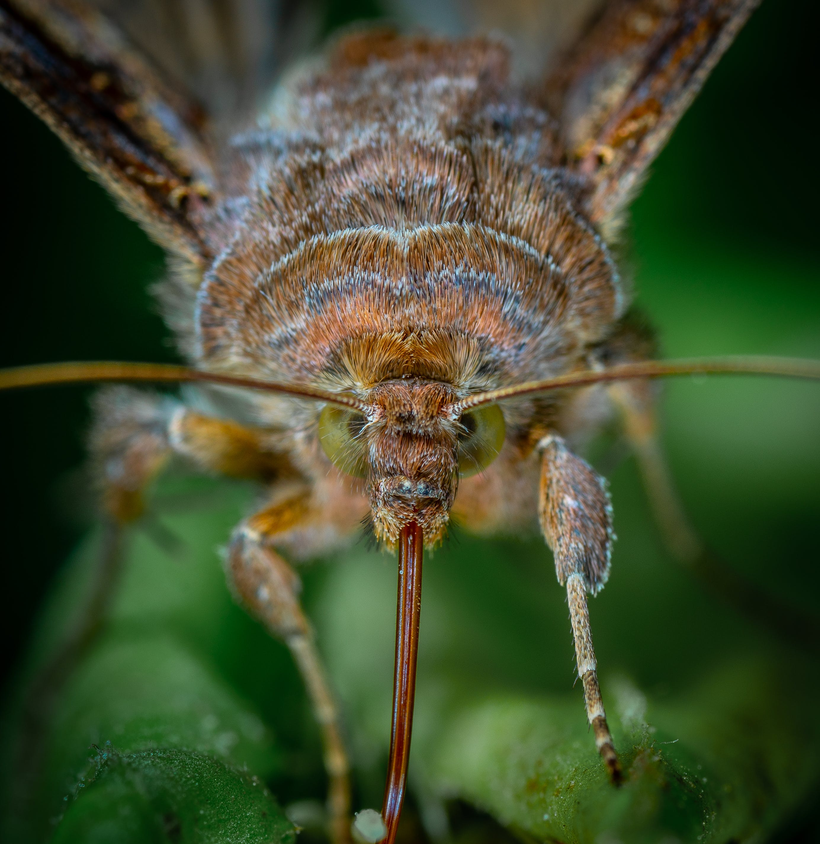 insect, macro