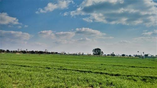 Imagine de stoc gratuită din culturi, nori, sat