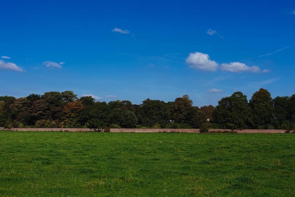 dunham massey, england, meadow