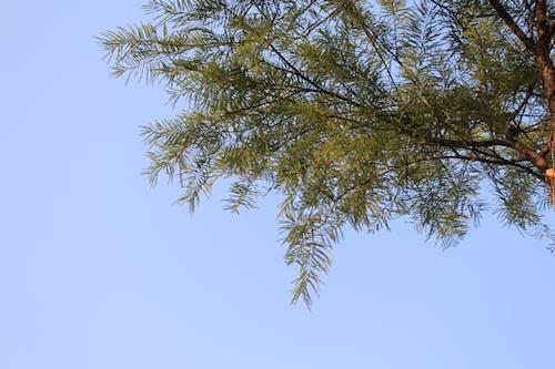 Foto d'estoc gratuïta de arbre, molt