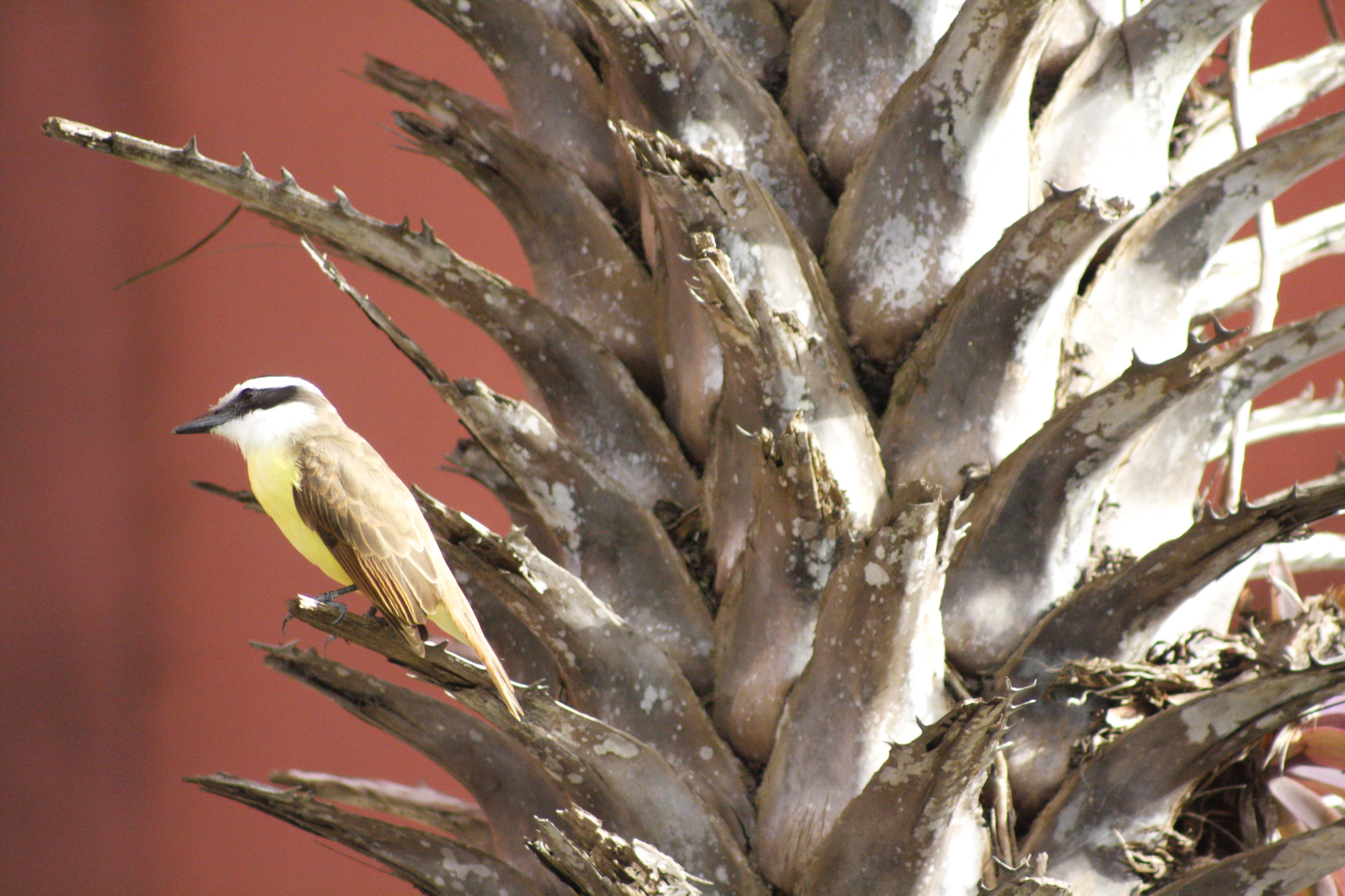 Μεγάλο λευκό πουλί κοντινό