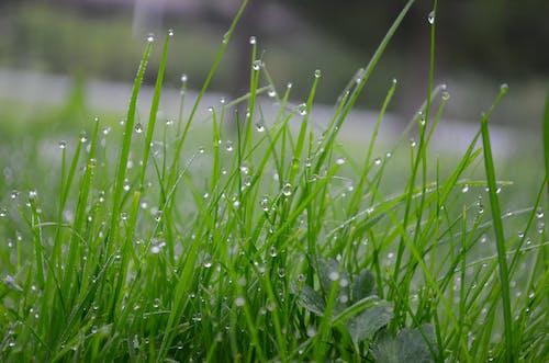 Δωρεάν στοκ φωτογραφιών με βροχή, μετά τη βροχή, πράσινος, σταγόνα νερού