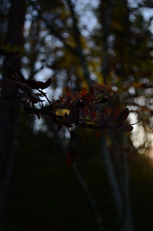 Základová fotografie zdarma na téma dřevo, les, temnota, večer