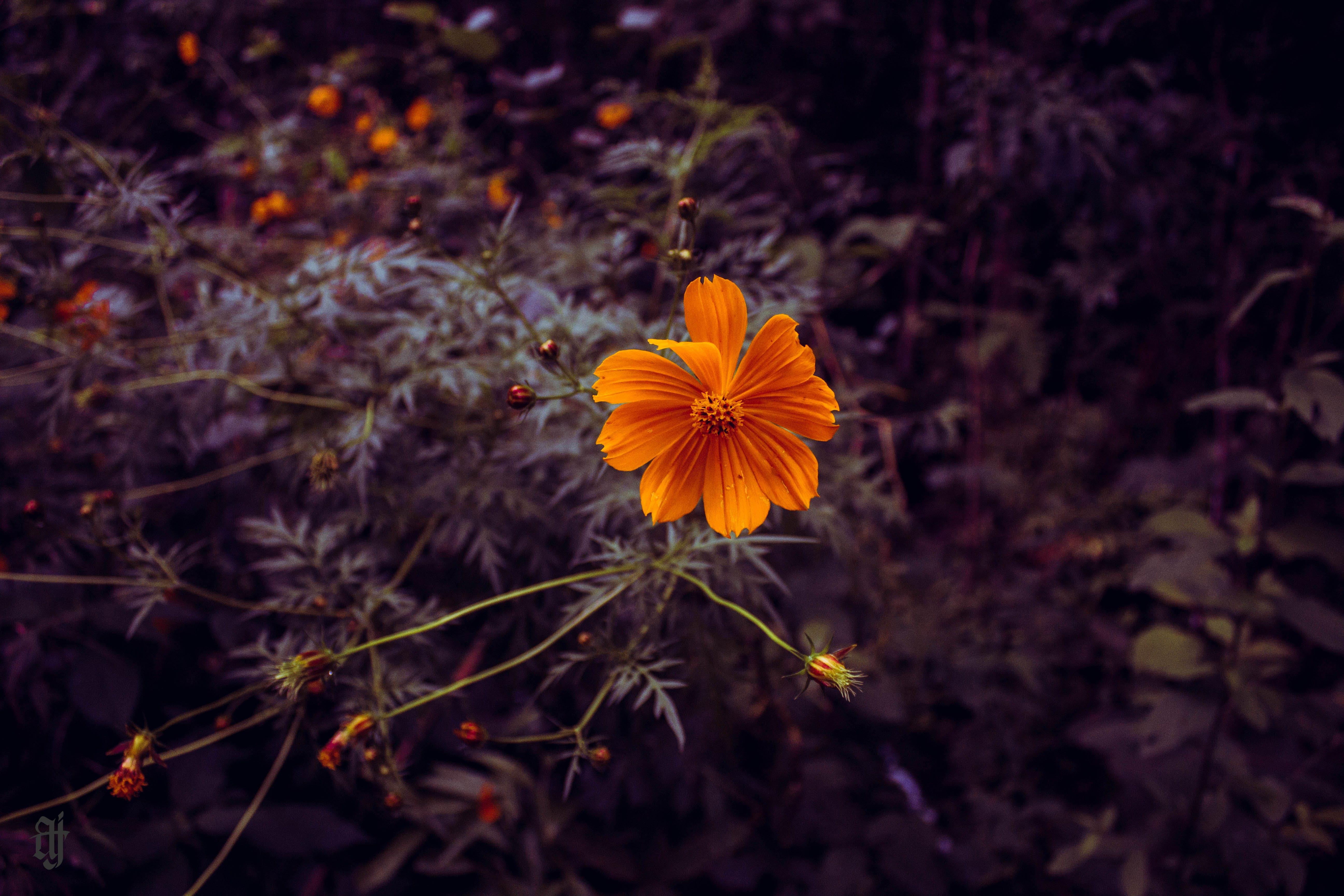 Ảnh lưu trữ miễn phí về cánh hoa, hệ thực vật, lý lịch, màu vàng