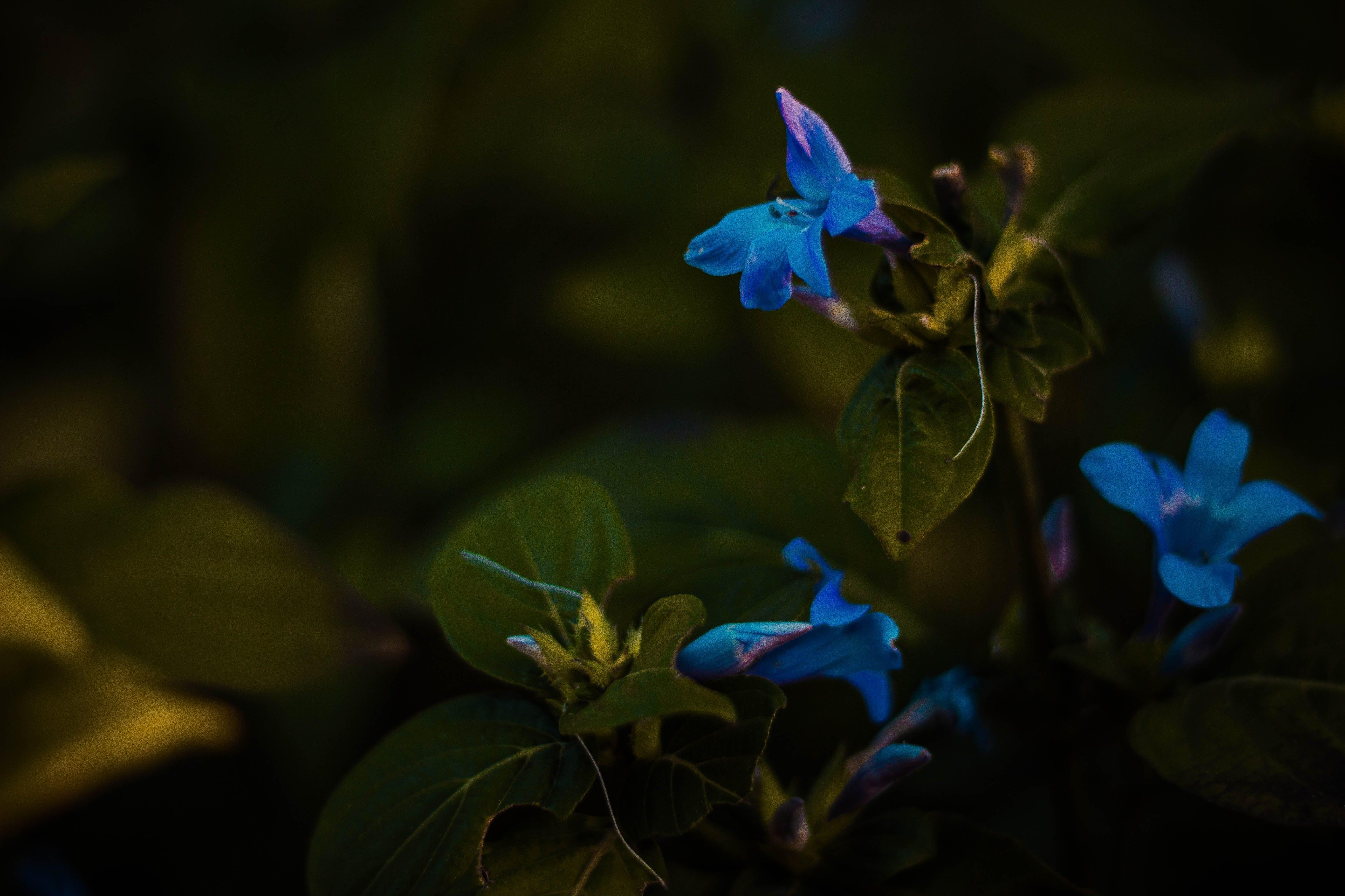Darmowe zdjęcie z galerii z flora, kwiat, natura, ogród