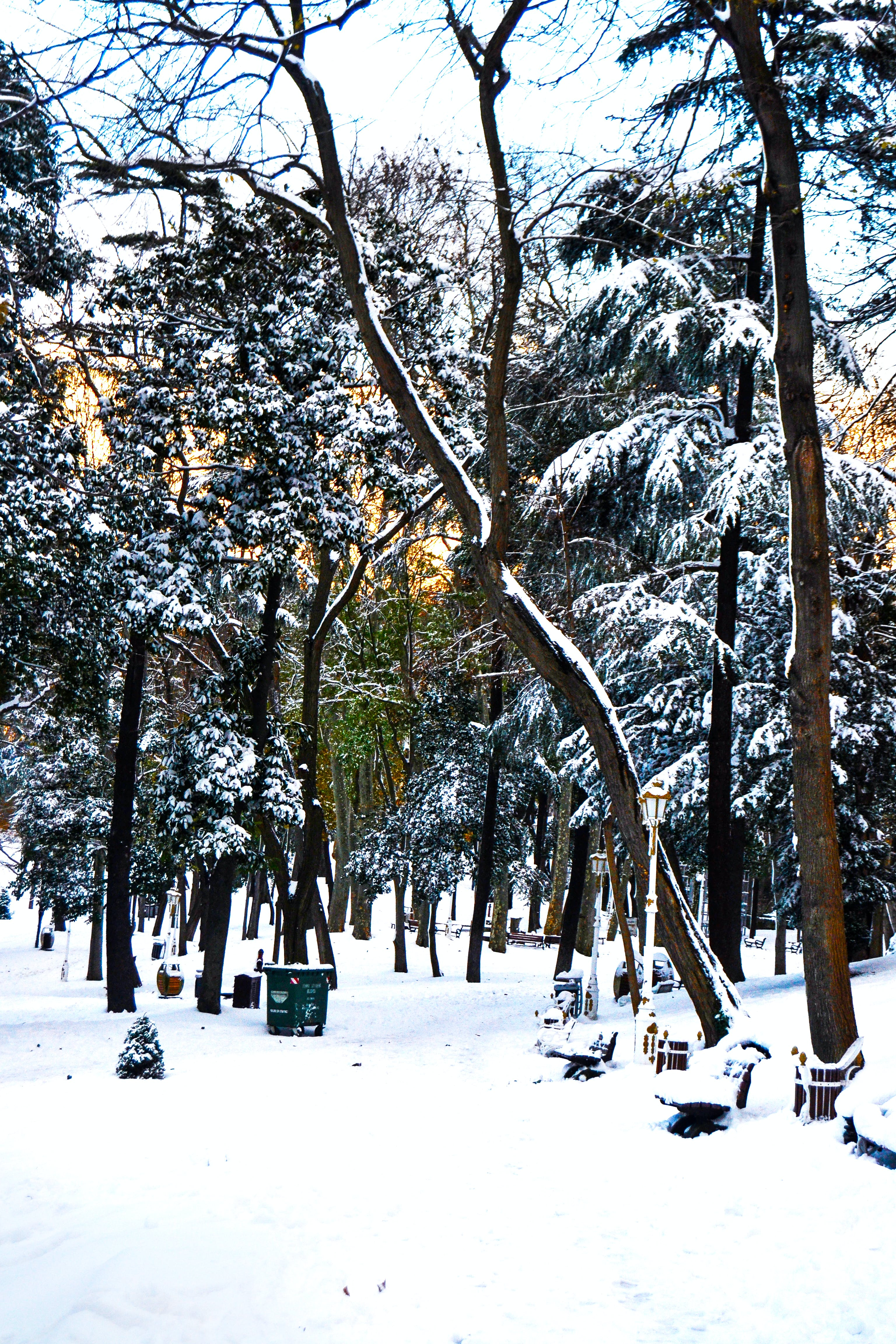 Free stock photo of #forest #color #snowy, #snow #white
