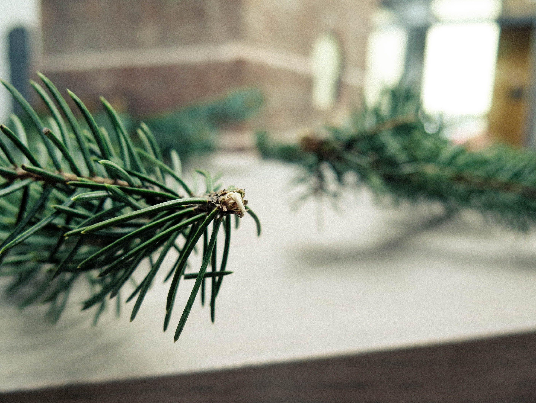 Free stock photo of table, tree, green, christmas