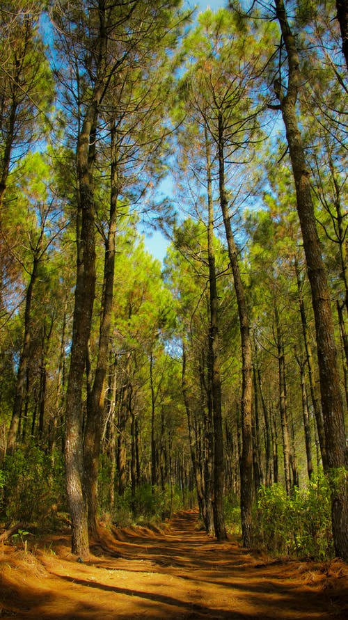 Immagine gratuita di alberi, alto, indonesia, leggero