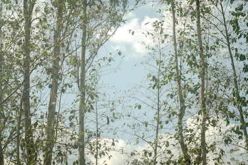 Immagine gratuita di alberi, cielo, cloud, indonesia