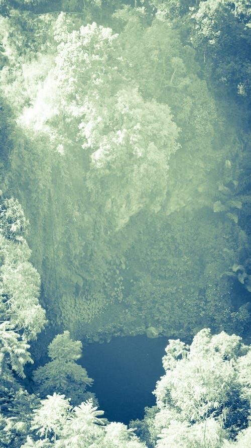 Immagine gratuita di bianco, foresta, indonesia, scogliere